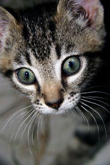 Free Kitten Stock Image - 1948271