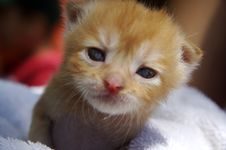 Free Kitten Stock Photography - 1948322