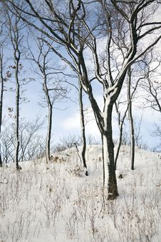 Free Winter Forest Royalty Free Stock Photos - 1948918