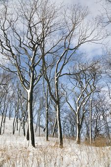 Free Winter Forest Royalty Free Stock Photo - 1948985