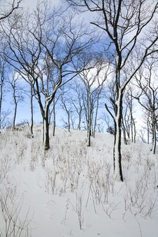 Free Winter Forest Royalty Free Stock Images - 1949239