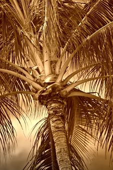 Free Palms Royalty Free Stock Images - 1949309