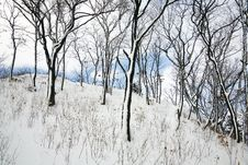 Free Winter Forest Stock Images - 1949404
