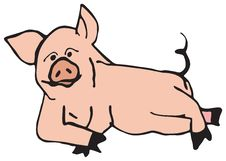 Free Swine Oink Stock Images - 1949644