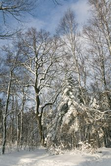 Free Winter Forest Stock Photography - 1949672