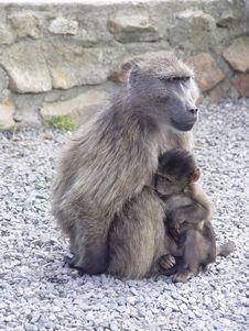 Free Monkey Mother Stock Photos - 1949823