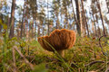 Free Mushrooms In Green Forest Stock Photos - 19400133
