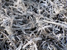 Free Ashes Of Burnt Grass Royalty Free Stock Photo - 19400075