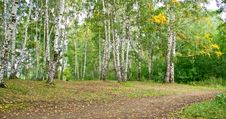Free Forest Landscape Stock Photography - 19401022