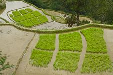 Free Rice Terraces Royalty Free Stock Photos - 19401598