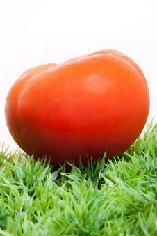 Fresh Tomato On Green Grass Royalty Free Stock Photography