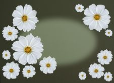 Greetingcard With Cosmea Flowers Royalty Free Stock Photography