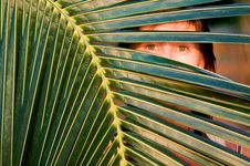 Free Palm Tree And The Woman Royalty Free Stock Photography - 19405297