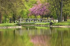 Free Silent Lake In The Park.jpg Royalty Free Stock Photography - 19406207