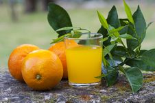 Free Orange Juice Stock Photos - 19406983