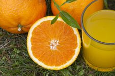 Free Orange Juice Royalty Free Stock Images - 19407119