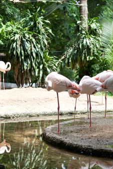 Free Animals At The Zoo. Stock Image - 19407131