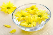 Free Yellow Flowers In Glass Bowl Royalty Free Stock Photo - 19407265