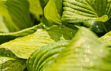 Free Water Drops On The Fresh Green Leaf Stock Photos - 19408273