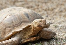 Giant Tortoise Stock Photo