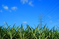 Free High Voltage Tower Above Pineapple Plant Stock Photography - 19409242