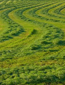 Close-up Of Fresh Spring Green Grass Stock Photos