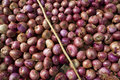 Free Red Onions. Royalty Free Stock Photography - 19410657