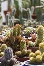 Free Variety Of Cactus Stock Photography - 19411402