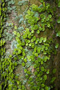 Free Small Green Leaves On Palm Trunk Royalty Free Stock Photos - 19411998