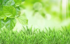 Free Natural Green Blurred Background Royalty Free Stock Photo - 19410575