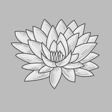 Free Lotus Stock Photography - 19411072