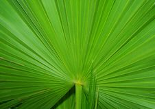 Free Palm Leaf Background Royalty Free Stock Images - 19412189