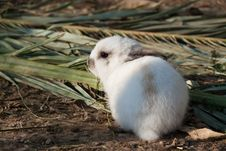 Free Young Rabbit Royalty Free Stock Photography - 19413297