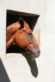 Free Horse Royalty Free Stock Photo - 19416765