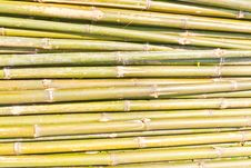 Free Bamboo Was Cut Stock Photo - 19417220