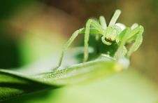 Free Green Spider Stock Photos - 19417233