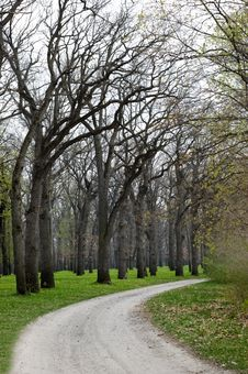 Free Walkway Between Trees Royalty Free Stock Photos - 19418188
