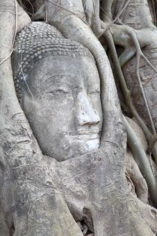 Free Buddha Statue Entwined By Roots Of Spiritual Tree Stock Image - 19418261