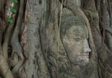 Free Buddha Image Head Stuck In The Tree3 Stock Photography - 19418432