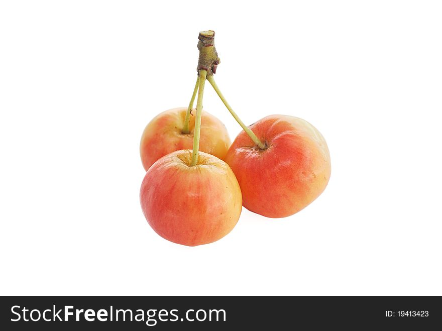 Forest apples