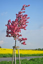 Free Spring Tree Landscape Royalty Free Stock Images - 19421729