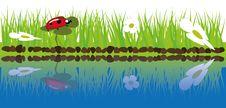 Free Green Grass Near Water Stock Photos - 19420003