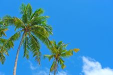 Free Palm Tree Stock Images - 19420114