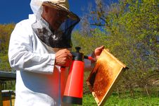 Beekeeper In His Apiary Stock Image