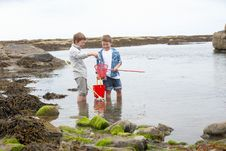 Free Two Boys Collecting Shells On Beach Royalty Free Stock Photos - 19420698