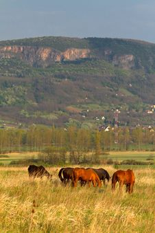 Free Horses Royalty Free Stock Photography - 19422207