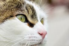 Free Eyes S Cat Stock Photography - 19423682