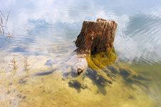 Free Old Stump Of A Tree In A Forest Lake Royalty Free Stock Image - 19424276