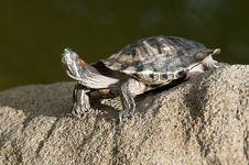 Tortoise On The Rock Royalty Free Stock Photos