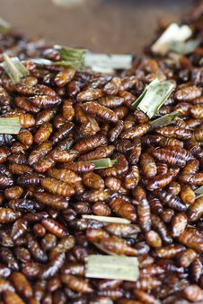 Free Thai Insect Food Stock Image - 19425271